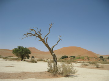 24 NAMIBIA 2008 Canon 219