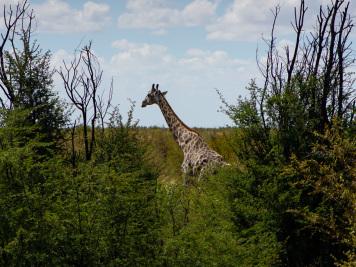 Reise 047-Quer durch Afrika - Marion und Daniel - Geschichten von unterwegs. Foto by Daniel Kempf-Seifried-119