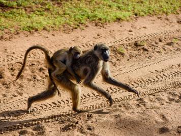 Reise 047-Quer durch Afrika - Marion und Daniel - Geschichten von unterwegs. Foto by Daniel Kempf-Seifried-159