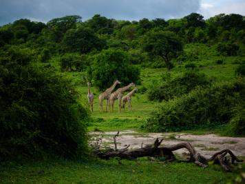 Reise 047-Quer durch Afrika - Marion und Daniel - Geschichten von unterwegs. Foto by Daniel Kempf-Seifried-173