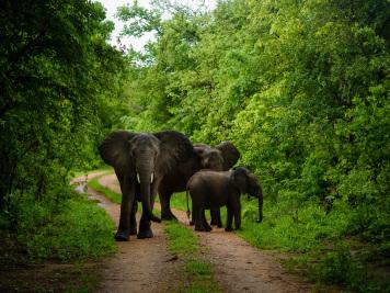 Reise 047-Quer durch Afrika - Marion und Daniel - Geschichten von unterwegs. Foto by Daniel Kempf-Seifried-309