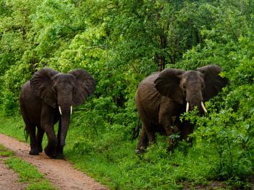 Reise 047-Quer durch Afrika - Marion und Daniel - Geschichten von unterwegs. Foto by Daniel Kempf-Seifried-311