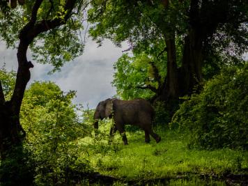 Reise 047-Quer durch Afrika - Marion und Daniel - Geschichten von unterwegs. Foto by Daniel Kempf-Seifried-314