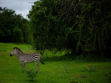 Reise 047-Quer durch Afrika - Marion und Daniel - Geschichten von unterwegs. Foto by Daniel Kempf-Seifried-316